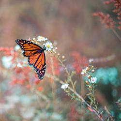 Butterfly Garden V