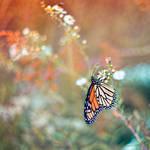 Butterfly Garden VI