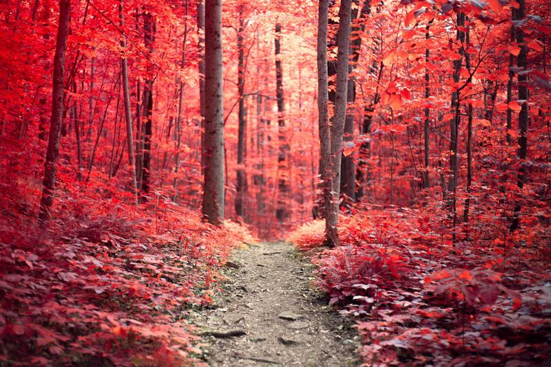 Scarlet Woods by LashelleValentine