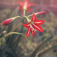 Mother's Flowers III by LashelleValentine
