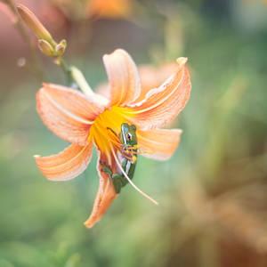 A Flower's Whisper