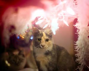 Christmas Kitties I
