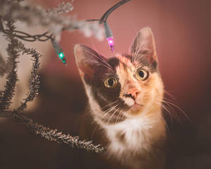 Christmas Kitties V