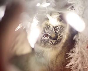Christmas Kitties VI