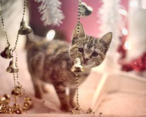 Christmas Kitties X