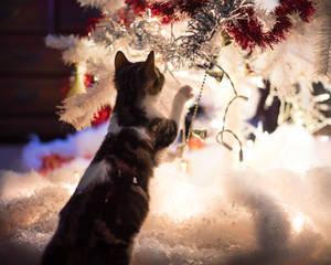 Christmas Kitties XII