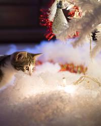 Christmas Kitties XV