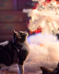 Christmas Kitties XIV