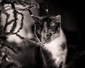 Christmas Kitties XVI