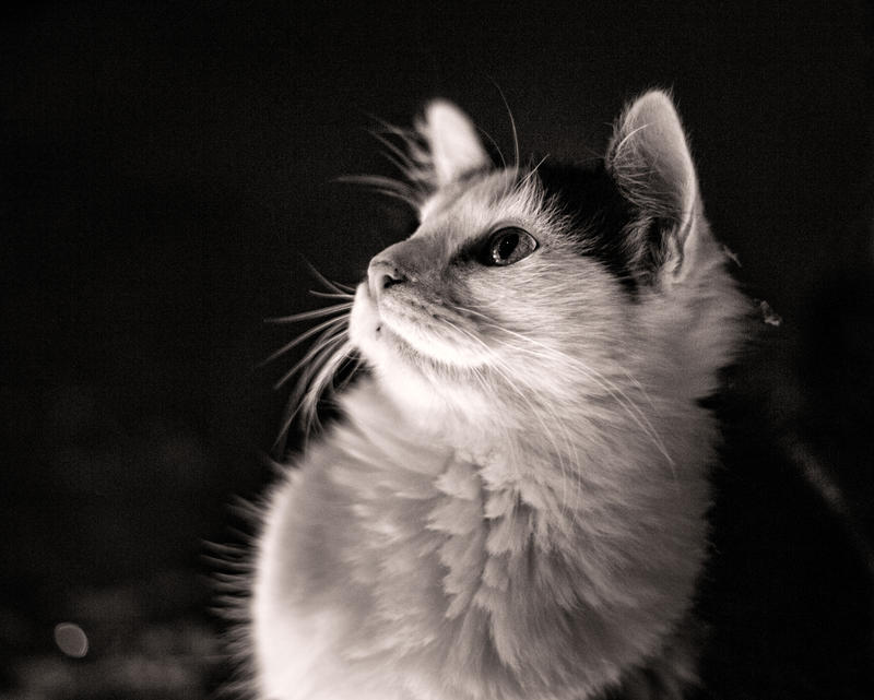 Christmas Kitties XVII