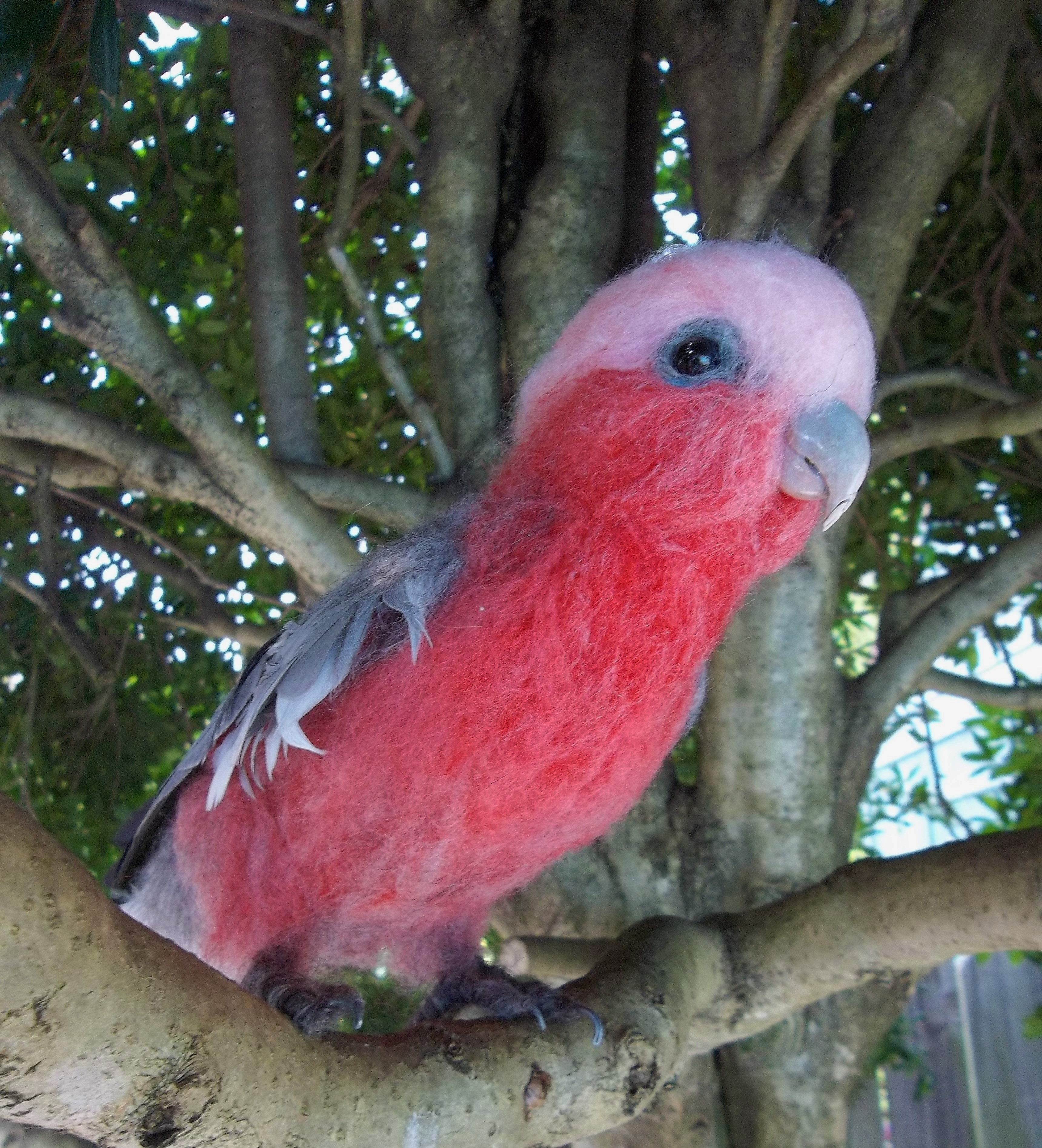 Cockatoo, red-breasted