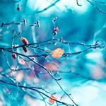 Winter Wonderland. ..
