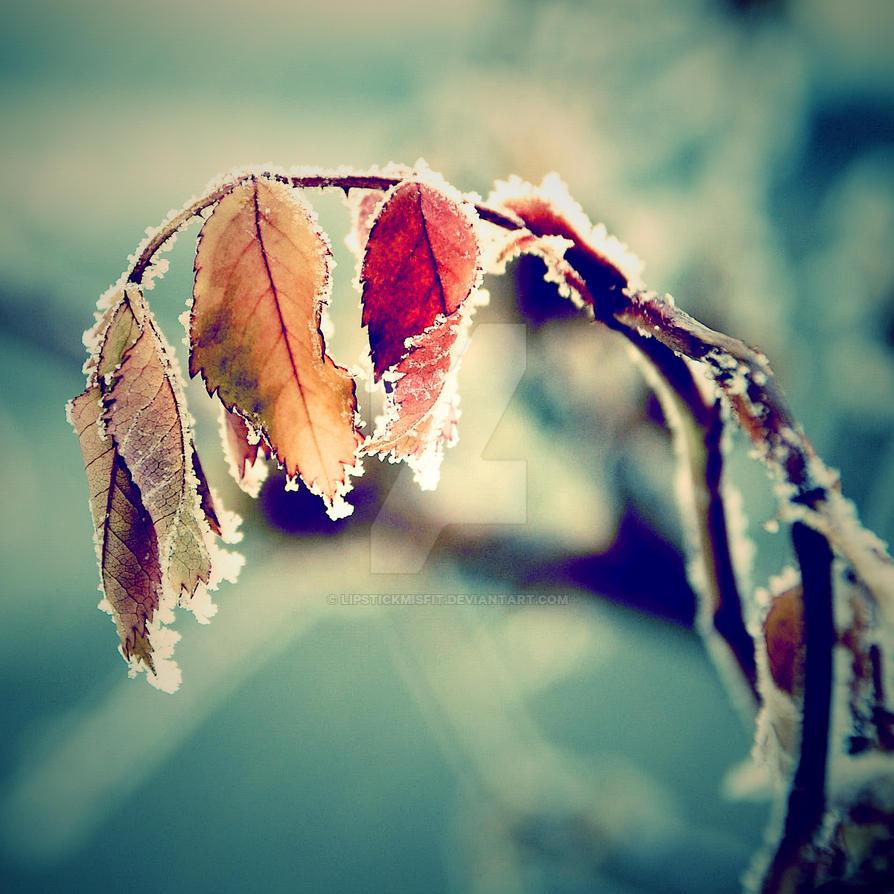 Winter Leaves by lipstickmisfit