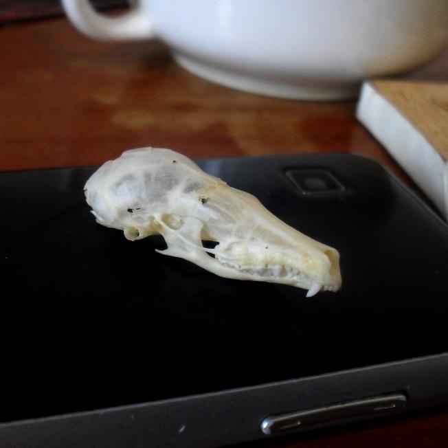 Mole Skull by OniBaka