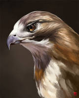 Hawk by Nutfullin