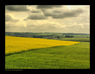 Green and Yellow by mehdili