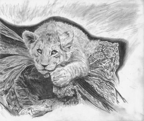 Lion on a Log