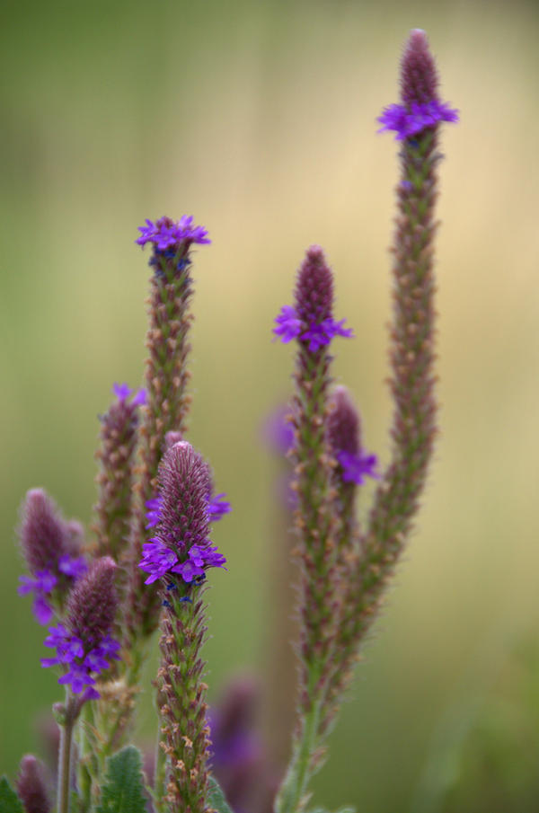 verbena chat sites Creative ideas for hostess gifts, including items for the home and garden, treats from your kitchen, gift basket suggestions, and more.