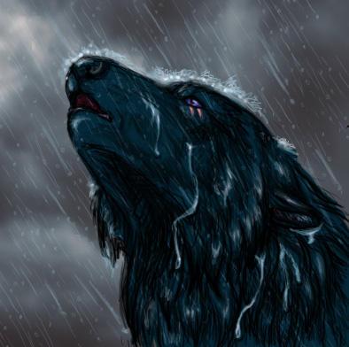 Uivo na noite chuvosa