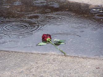 Left in The Rain by Retiredartist