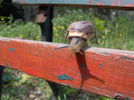 snail by mutewinter