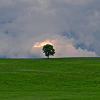 Tree and Glow by batmantoo