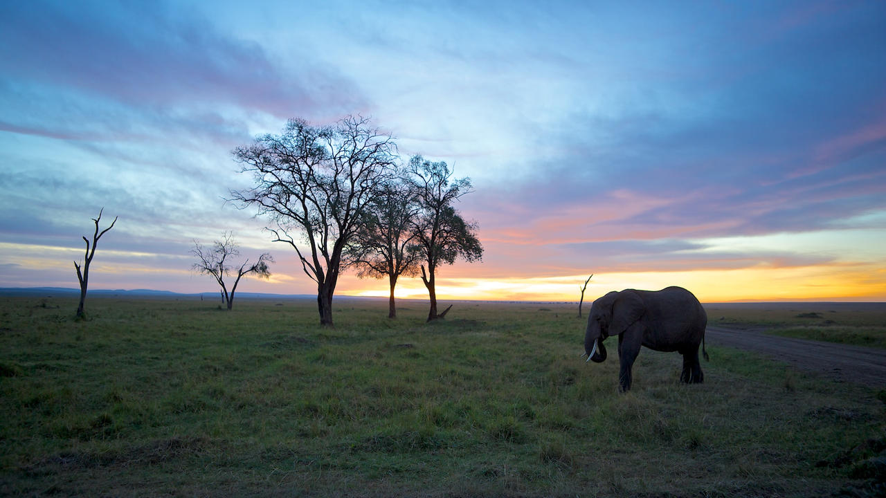 Elephant at Sunrise by batmantoo