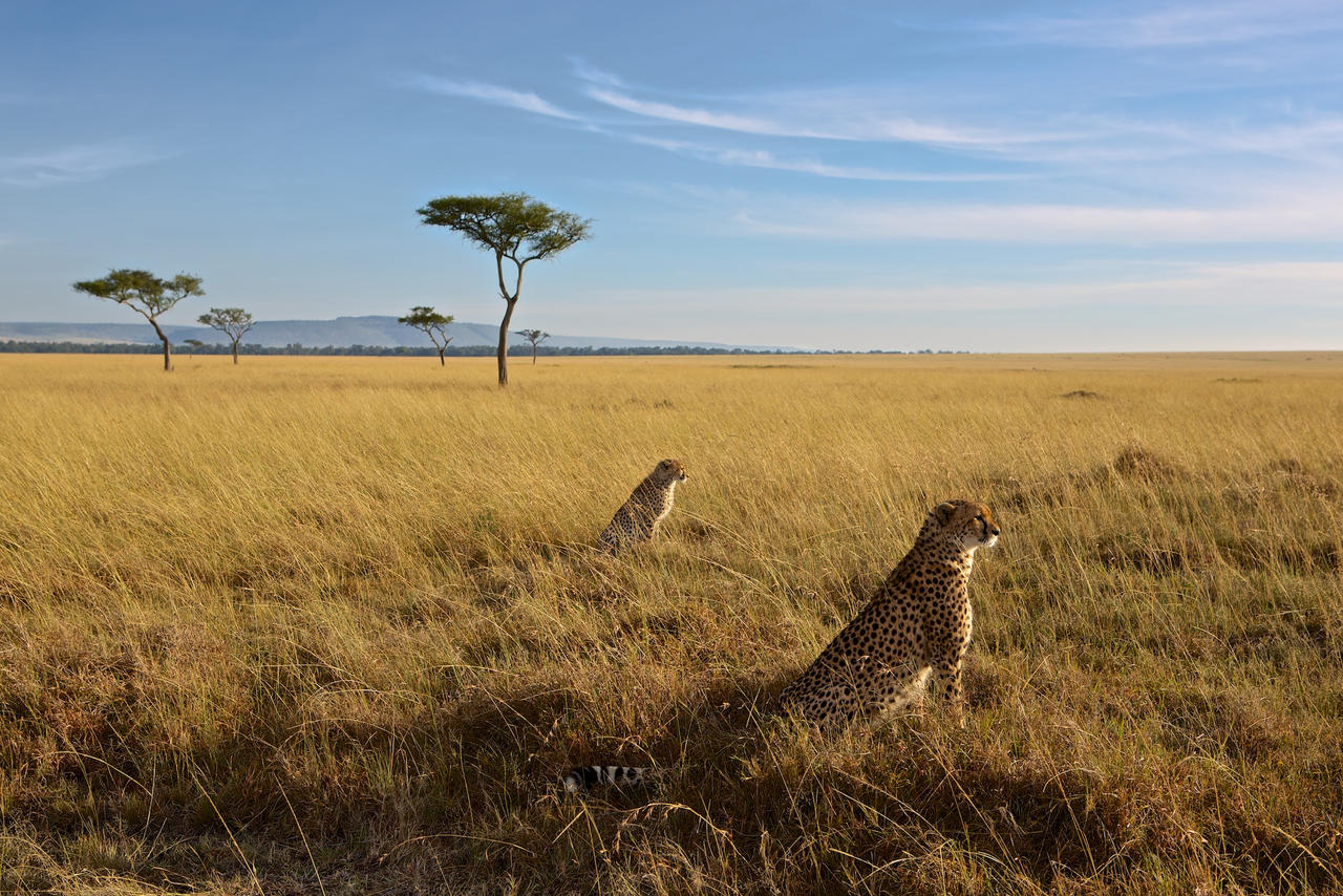 Best Masai Mara Tours