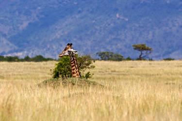 Sitting Giraffe by batmantoo