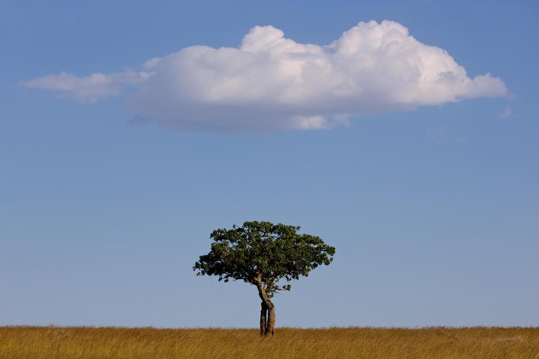 Sausage Tree by batmantoo