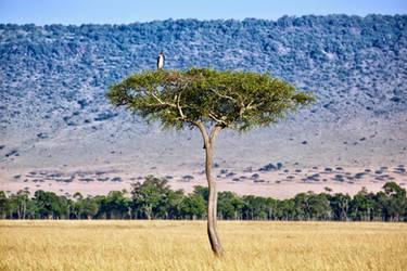 Stork On Tree by batmantoo