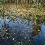 Mystic Pond