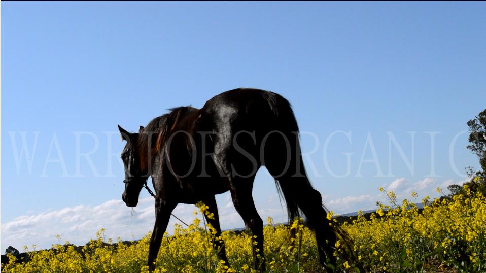 Walking in Fields of Gold by Warriorsorganic