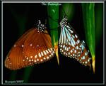 The Butterflies by yamiyalo