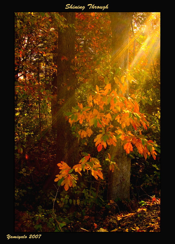 Shining Through by yamiyalo