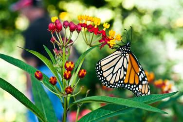hanging butterfly by yamiyalo