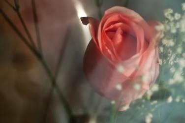 The rose topaz adjust by yamiyalo