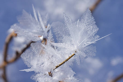 Feathers of Ice