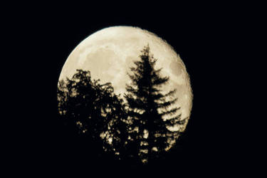 Black Forest Moon