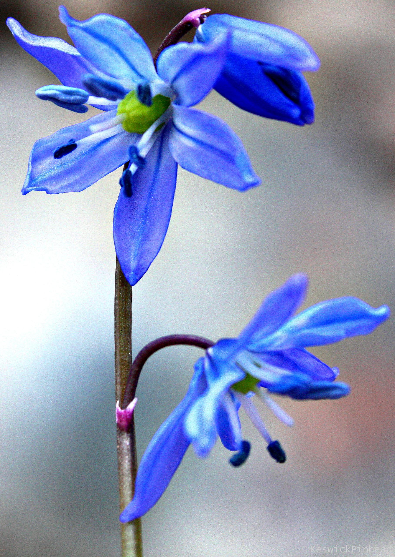 Return of Flowers by KeswickPinhead