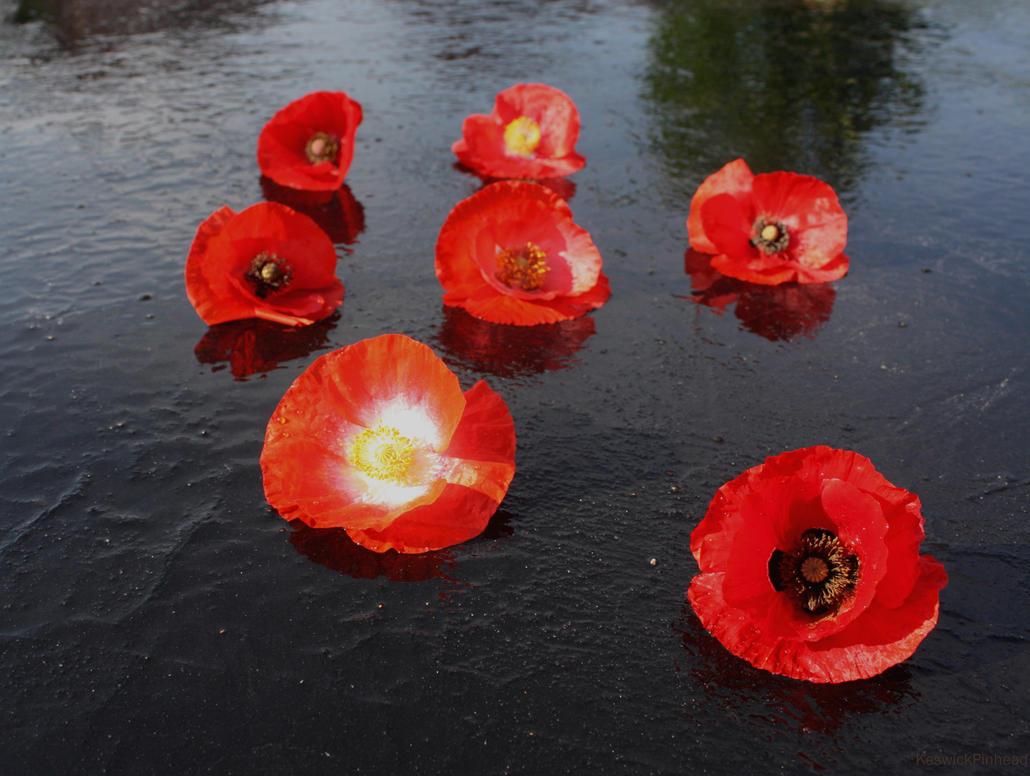 Poppies Lie by KeswickPinhead