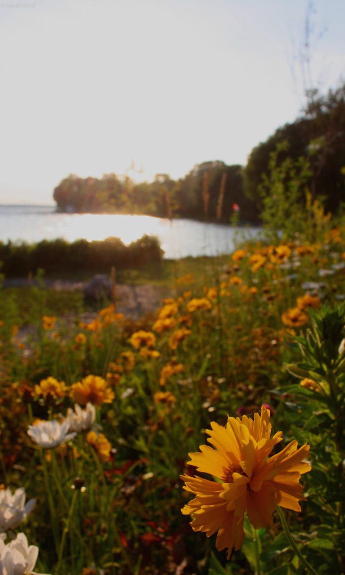 Lakeside Flowerbank by KeswickPinhead