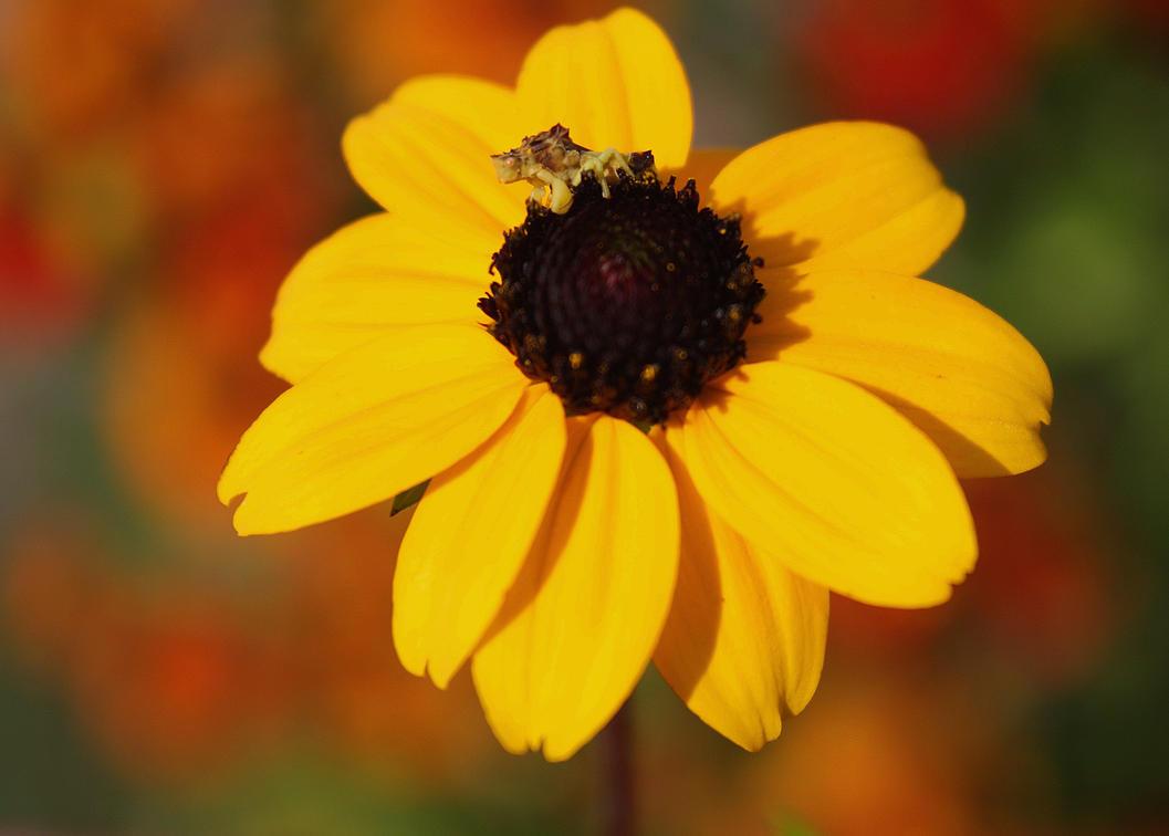 Jagabug Rotgold Bokeh by KeswickPinhead