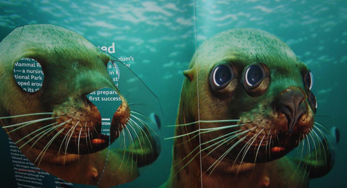 Seals etc. by KeswickPinhead