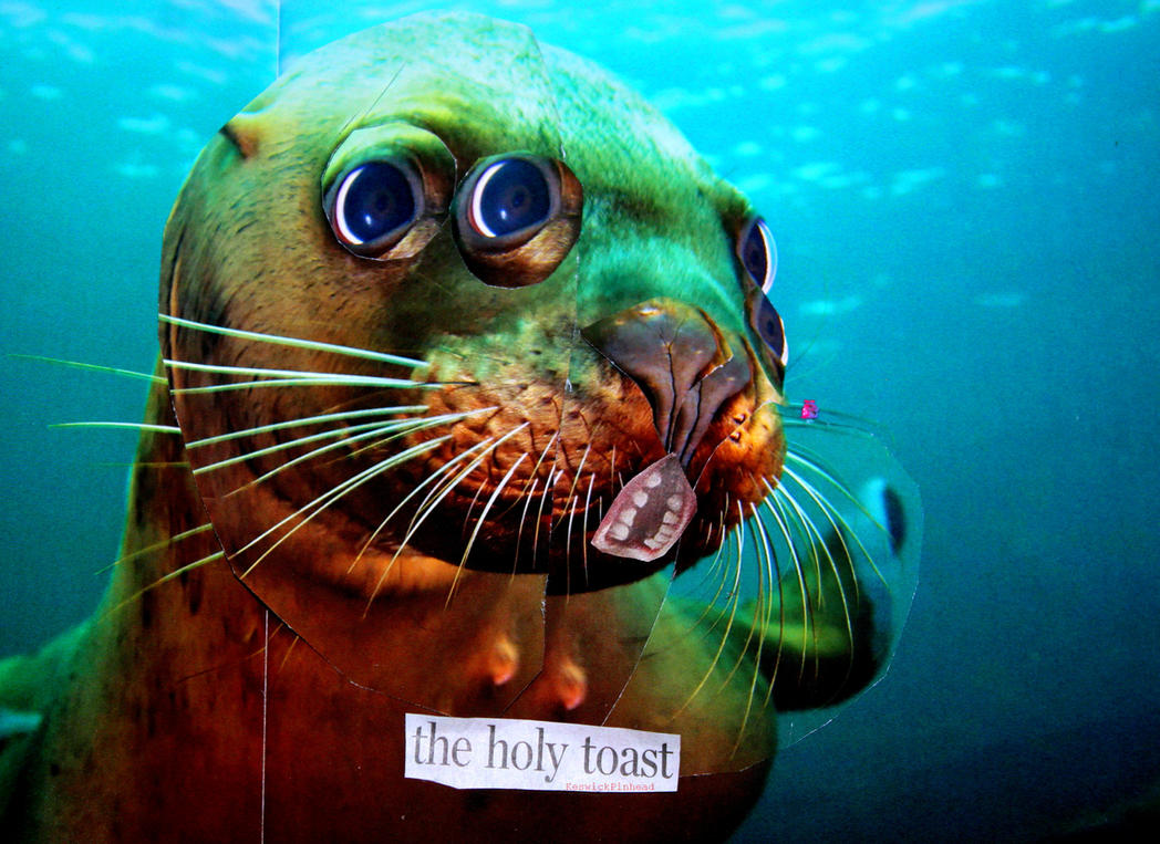 Seals are so cute by KeswickPinhead