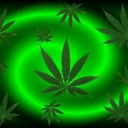 weed :00 by DarkVirus87
