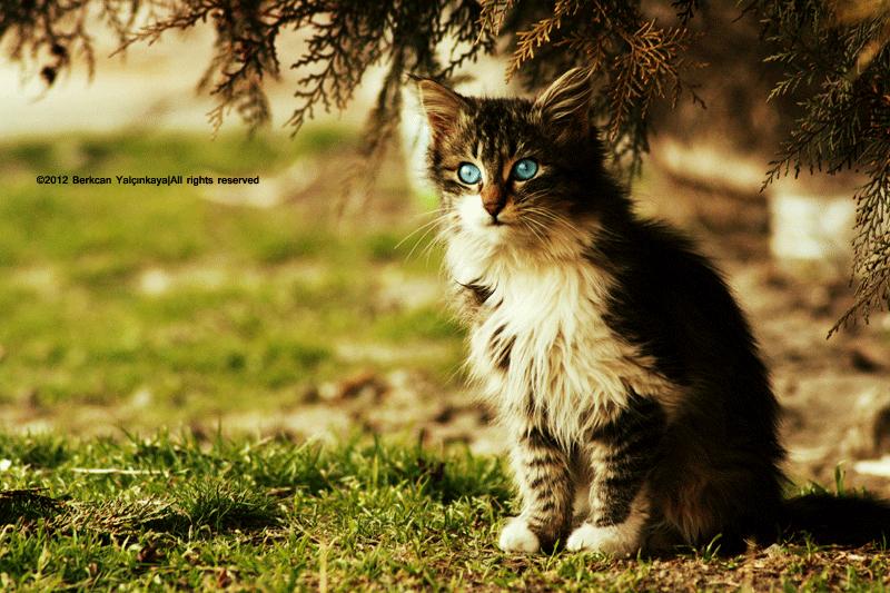 Cute Little Kitten by VoldroY