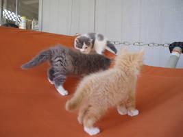 kittens by EdwardCullenfan