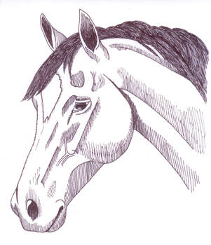 Horse face ink by ShapeShifter314
