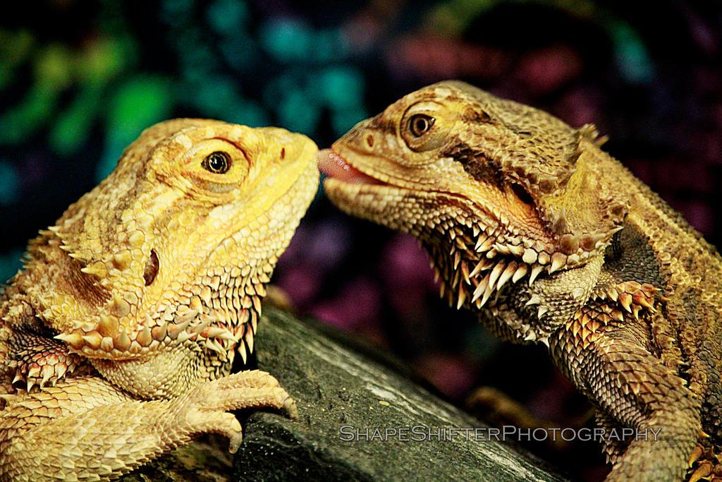 Dragon kisses by ShapeShifter314